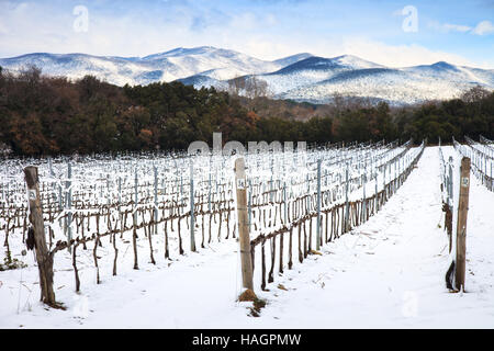 Vineyards rows covered by snow in winter. Chianti countryside, Florence, Tuscany region, Italy - Stock Photo