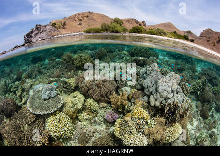 A healthy and biodiverse array of corals grows in the shallows near a small island within Komodo National Park, - Stock Photo
