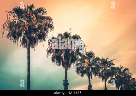 Tropical palmtrees with the colorful sky in the background - Stock Photo