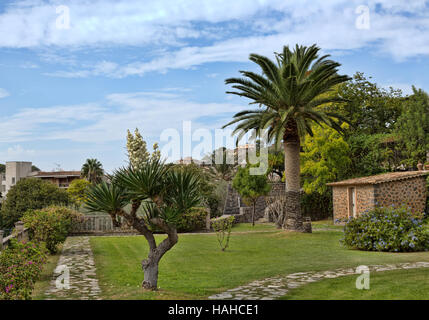 Palm tree in the backyard against the sky - Stock Photo