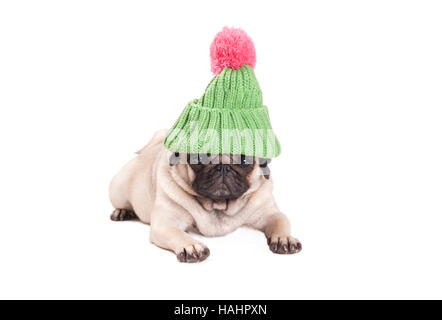 lovely pug puppy dog looking annoyed, lying down, wearing a green knitted hat with pink pompon, on white background - Stock Photo