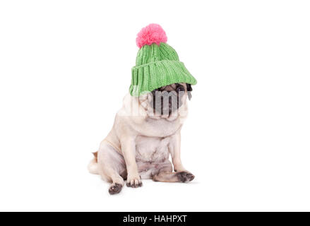 pug puppy dog sitting down and wearing green kniited rib stitch hat with pink pompon, on white background - Stock Photo