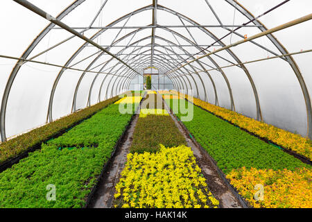young plants growing in greenhouse at seedling nursery - Stock Photo