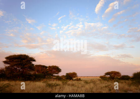 Morning at a steppe in Deception Valley, Central Kalahari Game Reserve, Botswana - Stock Photo