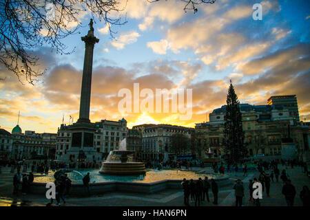 London, UK. 3rd Dec, 2016. UK Weather. Nelson's Column and Trafalgar Square Christmas Tree against a golden sunset - Stock Photo