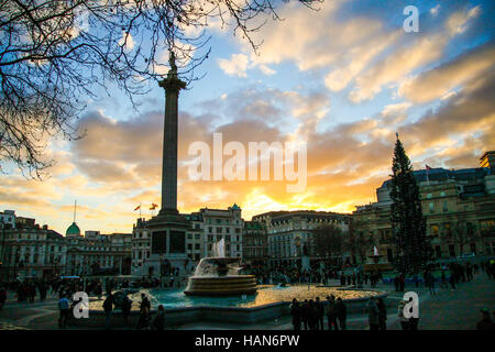 London, UK. 3rd Dec, 2016. UK Weather. Nelson's Column and Trafalgar Square Christmas Tree against a golden winter - Stock Photo