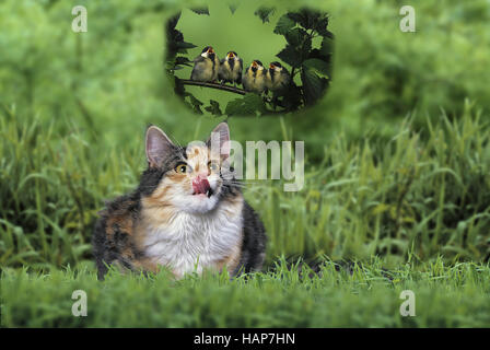 Cat and Birds / Katze und Voegel - Stock Photo