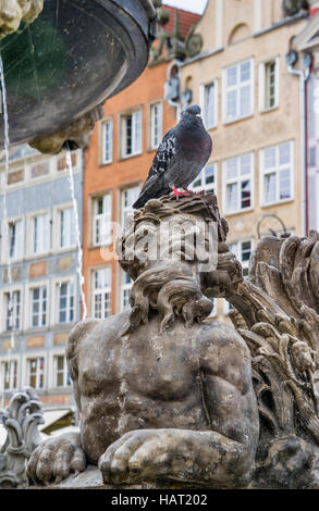 Poland, Pomerania, Gdansk (Danzig), a pidgeon perches on the sculpture of a mythological creature at Neptune's Fountain, - Stock Photo