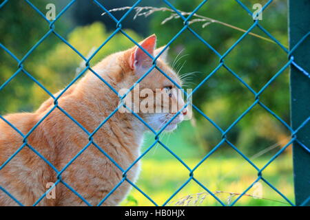Ginger Cat behind a fence - Stock Photo