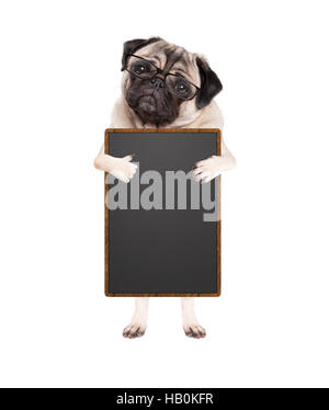 cute pug puppy dog with glasses, standing up holding blank blackboard sign giving  like with thumb, isolated on - Stock Photo