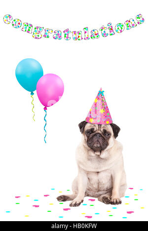 cute grumpy faced pug puppy dog with party hat, balloons, colourful confetti and text congratulations, on white - Stock Photo