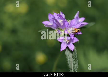 Rote Fliege - Stock Photo