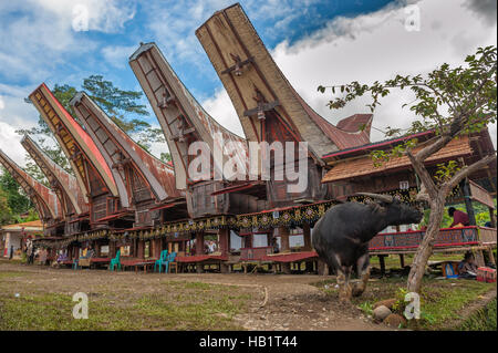 Tongkonan houses, traditional Torajan buildings, Tana Toraja, Sulawesi, Indonesia - Stock Photo
