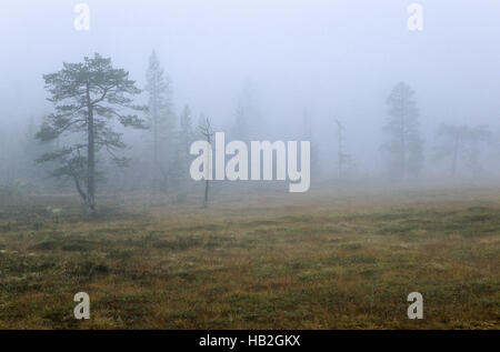 Hill moor in fog with moor grass in fall - Stock Photo