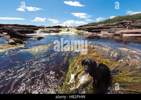 Beautiful Waterfall in the Canaima Lagoon with black dog sitting, Canaima National Park, Venezuela, South America - Stock Photo
