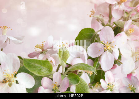 Spring blossoms against pink background - Stock Photo