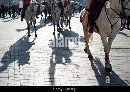 Horses parade in a city - Stock Photo