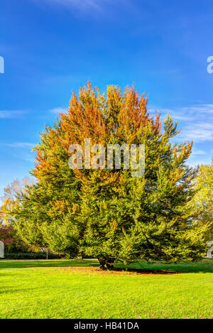 Autumn in Hamburg - Stock Photo