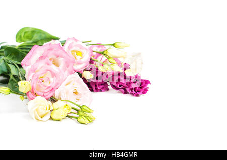Beautiful flowers eustoma in studio - Stock Photo