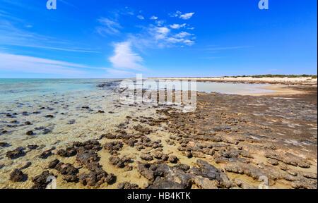 Stromatolites at Hamelin Pool Marine Nature Reserve. Shark Bay - Stock Photo