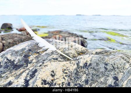 White feather on a coastal rock in Finland - Stock Photo