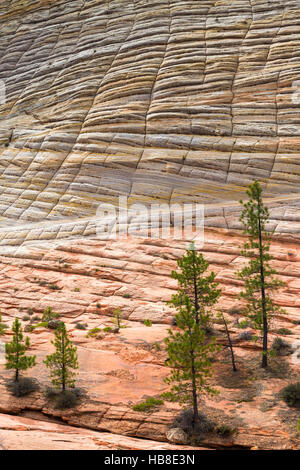 Rock formations, Zion National Park, Utah, USA - Stock Photo