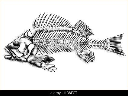 black fish skeleton isolated on the white background - Stock Photo