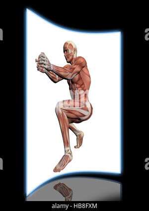 Human Anatomy -Male Muscles - Stock Photo
