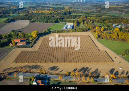 Aerial view, corn crop with scientific support Pelkum, Kamen Street Barbecke, Hamm, Ruhr, Nordrhein-Westfalen, Germany - Stock Photo