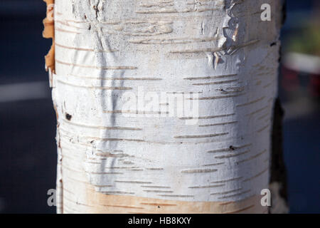 Close-up of birch tree bark texture - Stock Photo