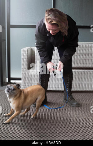 Bugg dog (cross between Boston Terrier and Pug) exited about getting ready to go out for a walk - Stock Photo