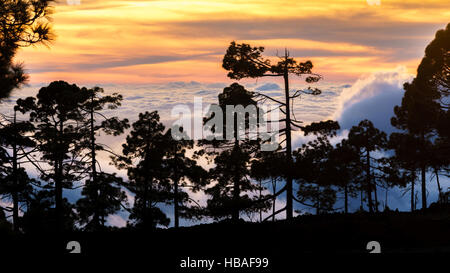 Landscape at sunset on the island of Tenerife. A silhouette of pine trees stand out on the sea of clouds that forms - Stock Photo