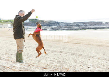 Man and dog on beach, Constantine Bay, Cornwall, UK - Stock Photo