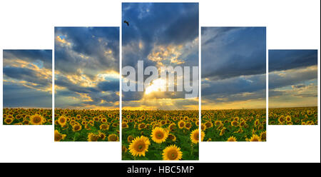 Summer landscape: Multi frame photos with beauty sunset over sunflowers field - Stock Photo