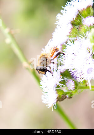 The bee sitting on a flower. - Stock Photo