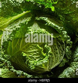 Savoy cabbage head - Stock Photo