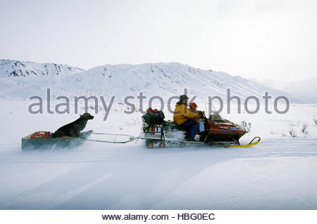 A lynx relocation trapper rides a snowmobile through the Wolf Flats with his daughter and dog. - Stock Photo