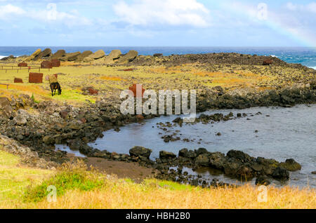 Solitary horse grazing on the rocky shore of Chile's Easter Island in the southeastern Pacific Ocean - Stock Photo