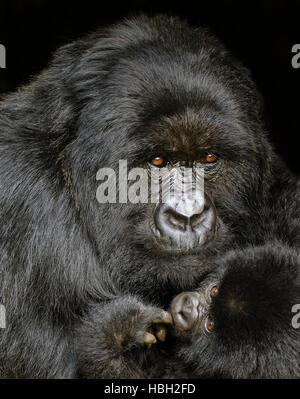 Portrait of Mother and Baby Mountain Gorilla (Gorilla beringei beringei) - Stock Photo
