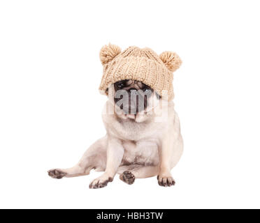 sweet pug puppy dog sitting down and wearing a knitted hat with pompoms, isolated on white background - Stock Photo