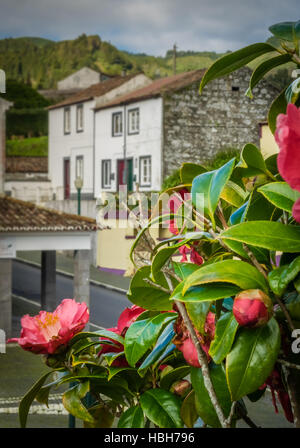 Homes in Furnas and pink azalea flowers - Stock Photo