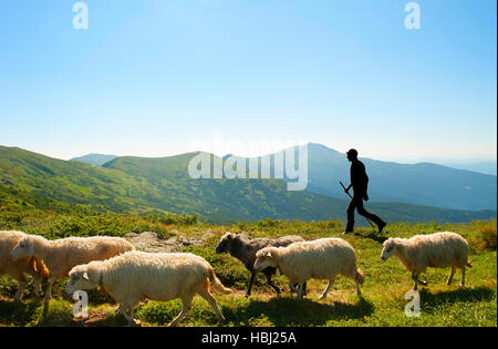 Herdsman in the mountains - Stock Photo