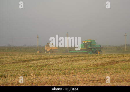Soy harvesting by combines in the field. - Stock Photo