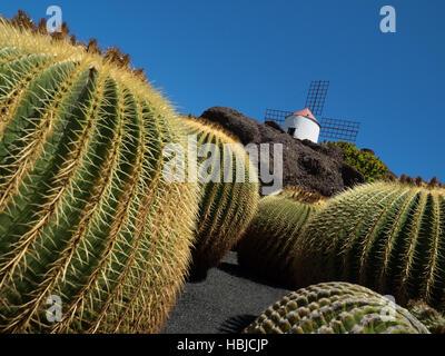 Cactus Garden in Lanzarote - Stock Photo