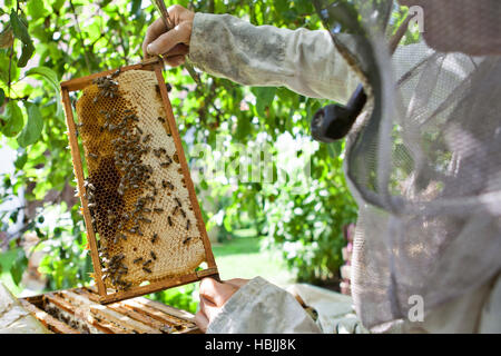 bee keeper with bee colony - Stock Photo