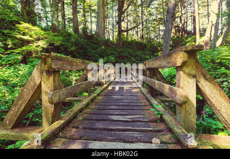 Vancouver forest - Stock Photo