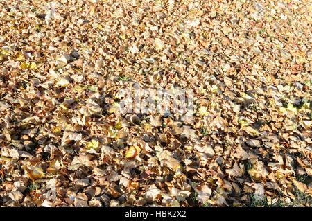 Leaves on the ground - Stock Photo