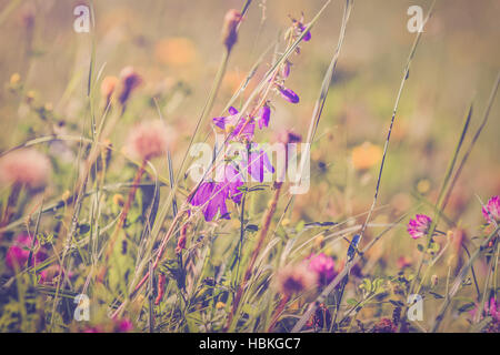 Wildflowers on summerly meadow - Stock Photo