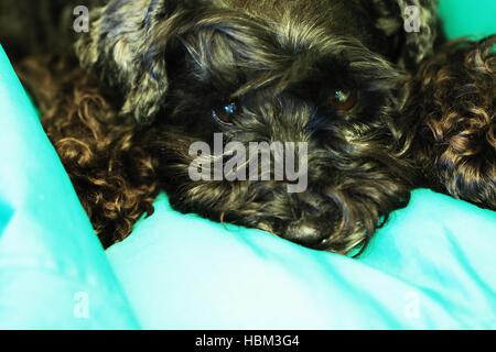 Sad lovely dog - Stock Photo
