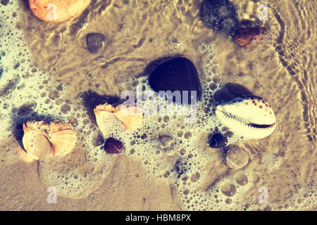 The shells and stones on the seashore - Stock Photo